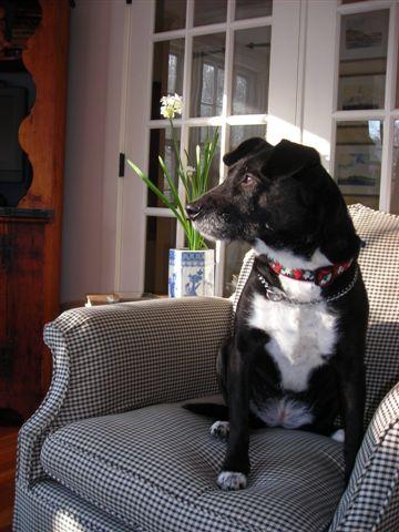 Doggie Decor: Pet-Friendly Decorating Ideas